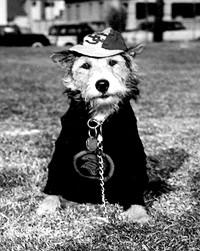 USC mascot dog